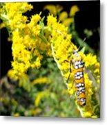Webworm Moth Metal Print