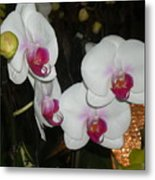 Wedding Orchids Metal Print