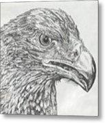 Wedgetail Eagle Metal Print