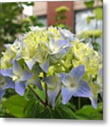 Wednesday May 18 2016 Metal Print