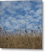 Weeds And Dappled Sky Metal Print