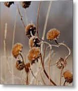 Weeds Are Pretty Too Metal Print
