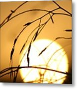 Weeds In The Sun Metal Print