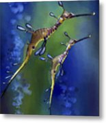 Weedy Sea Dragon Metal Print