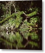 Weeki Wachee Springs Metal Print