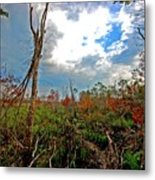 Weeks Bay Swamp Metal Print
