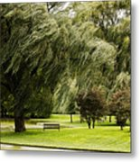 Weeping Willow Trees On Windy Day Metal Print