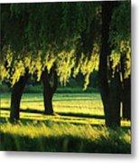 Weeping Willows Metal Print