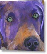 Weimaraner Dog Art Metal Print