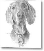 Weimaraner Dog Pencil Portrait Metal Print