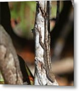 Well-camouflaged Lizard Metal Print