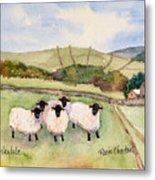 Wensleydale Sheep Metal Print