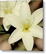 West Australian Wildflowers - Orchid 2 Metal Print