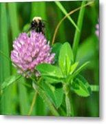Western Honey Bee On Clover Flower Metal Print