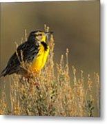 Western Meadowlark At Dawn Metal Print