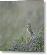 Western Meadowlark Morning Metal Print
