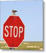 Western Meadowlark Singing On Top Of A Stop Sign Metal Print