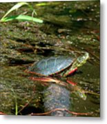 Western Painted Turtle Metal Print