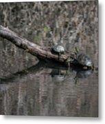 Western Painted Turtles On A Log Metal Print