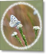Western White Butterfly Metal Print