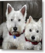 Westie World Metal Print