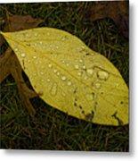 Wet Fallen Leaf Metal Print