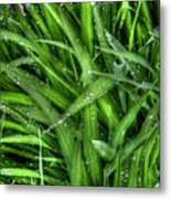 Wet Grass Metal Print