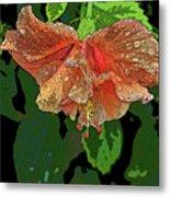 Wet Hibiscus Metal Print