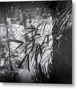 Wet Winter Metal Print