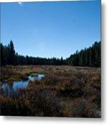 Wetlands In The Woods Metal Print