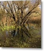 Wetlands Mirror Reflection Metal Print