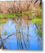 Wetlands Viewing Area In Chatfield State Park Metal Print