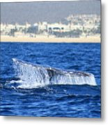 Whale Tail In Cabo Metal Print