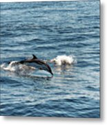 Whale Watching And Dolphins 1 Metal Print
