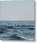 Whale Watching And Dolphins 2 Metal Print