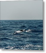 Whale Watching And Dolphins 3 Metal Print