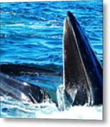 Whale's Opening Mouth Metal Print