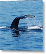 Whales Tale Metal Print