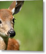 What A Face 1 Metal Print