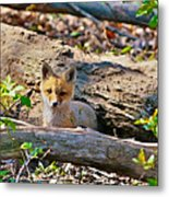 What A Fox Metal Print
