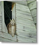 Great Horned Owl Metal Print
