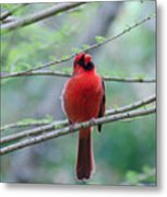 What Are You Doing? Metal Print by Julie Cameron