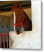 What Do Horses Think Of Us Metal Print