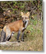 What Does The Fox Say Metal Print