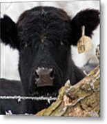 What Frost Metal Print