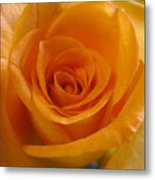 What Is In A Rose? Metal Print