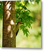 Whats A Woodpecker To Do Metal Print