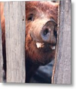 Whats New On Your Side Of The Fence Metal Print
