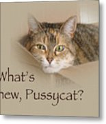 What's New Pussycat - Lily The Cat Metal Print