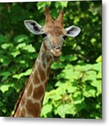 What's On Metal Print